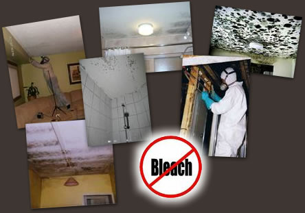 Mould Testing & Treatment Services in Gold Coast, Brisbane